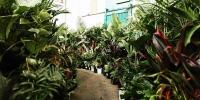 Perth - Huge Indoor Plant Warehouse Sale - Plants + Pups Sale!