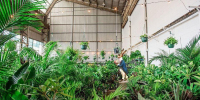 Melbourne - Huge Indoor Plant Warehouse Sale - Mad Hatter's Party