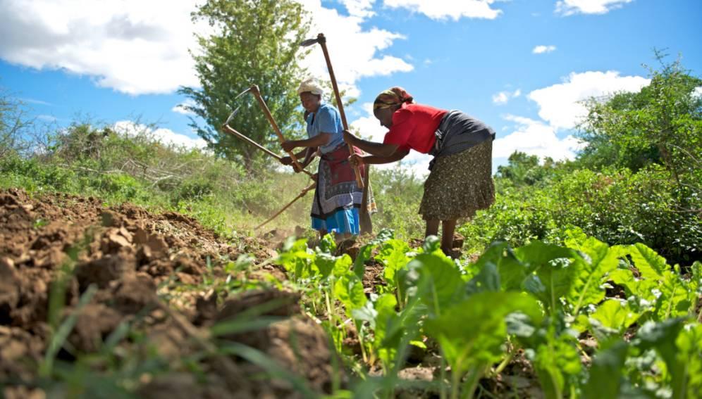 Training on Establishing and Strengthening Farmer Organizations, Nairobi, Kenya