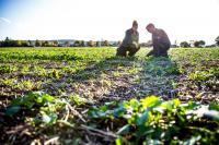 Training on Establishing and Strengthening Farmer Organizations