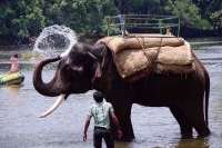 Bangalore to Coorg Weekend trip with Cab, Homestay, Activities #ChilledOut